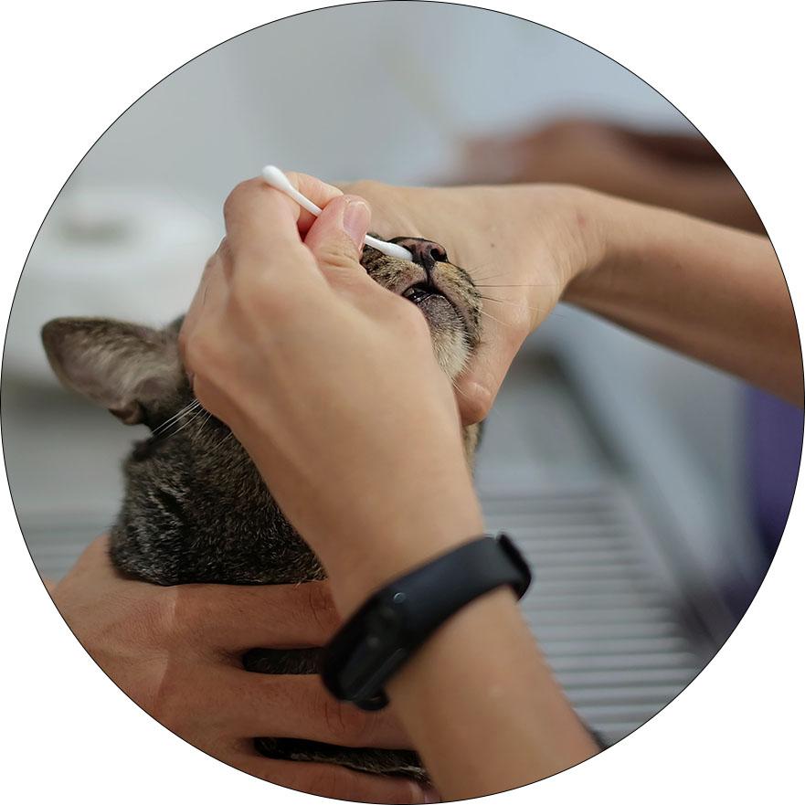 Veterinary website imagery NO WATERMARK